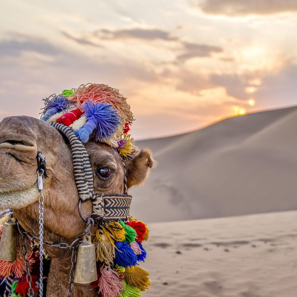 bafgh desert
